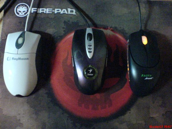 Mouse evolution